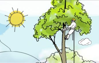 aboriculture, Arboricultural survey, Tree Constraints Plan, Arboricultural Implication Assessment, Arboricultural Method Statement, Tree survey, Tree, Trees