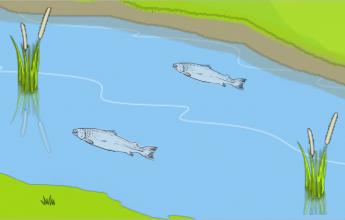 River habitats and alleviation, Flood alleviation, Flood defence, alleviation schemes