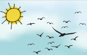 Bird, Birds, ornithology, Birds Survey, Bird Survey, Wintering Bird Survey, Breading Bird Survey, Breading Bird Check