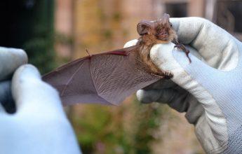 Hibernation Survey, Bats Transect Surveys,Preliminary Roost Assessment ,Licensing, Bats, Bat, Bat Survey,Licensing, Process and Supporting,Bat Activity Surveys