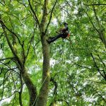 Tree climbing aerial inspection, bat, tree, climbing, tree climbing, aerial, aerial inspection, endoscope