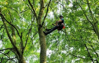 Tree climbing aerial inspection, bat, tree, climbing, tree climbing, aerial, aerial inspection, endoscope