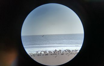 Birds - wild and windy wintering bird surveys