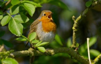 The 12 Days of Robin Facts, EcoNorth Ltd